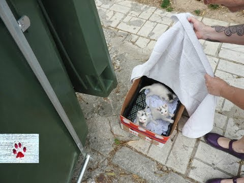 'Oops' - Rescue of a litter of kittens abandoned next to a garbage bin
