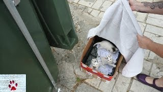 """Oops"" - Rescue of a litter of kittens abandoned next to a garbage bin"