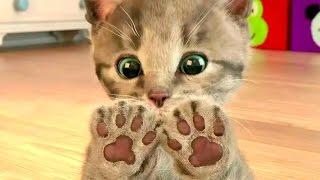 Мой маленький котенок. Веселые игры с котенком в детской игре