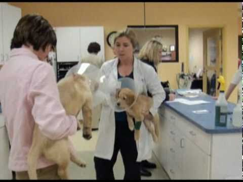 Dr. Michael Snyder Performs Puppy Cataract Surgery