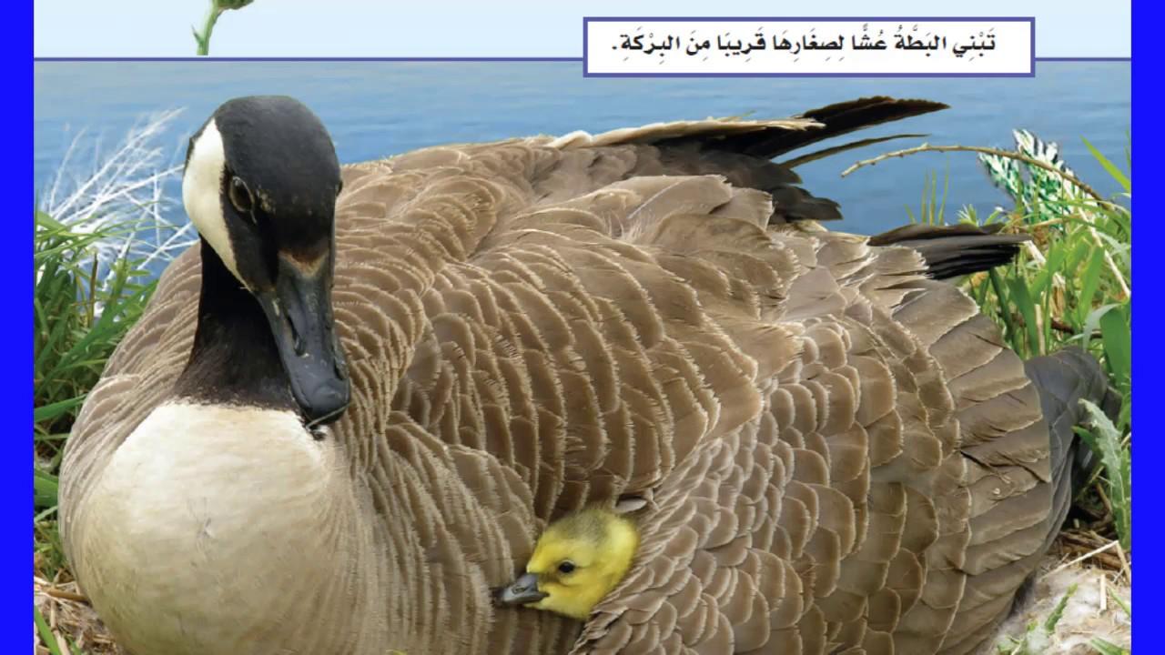 حاجات المخلوقات الحية علوم الصف الثاني الفصل الدراسي الأول منهج السعودية Youtube
