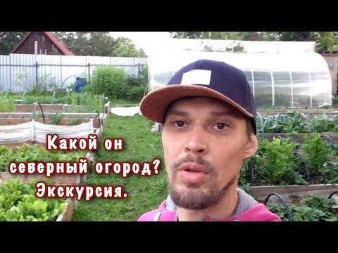 Какой он - северный огород? Экскурсия по органическому огороду.