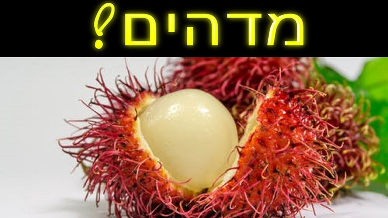 ☢ בול פגיעה - תגלית מדהימה: הסוד בגרעיני הפירות! מה השם רמז לנו שם?!