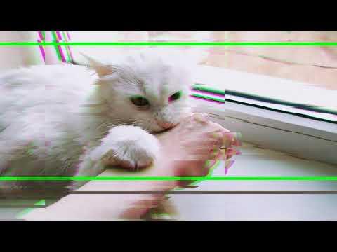 Кошка делает мне злобный Кусь!