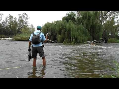 Vaal River: Chzech Nymph For Yellow Fish
