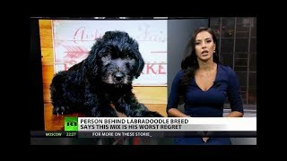 Labradoodle regrets: Creator laments rise of 'designer breeds'