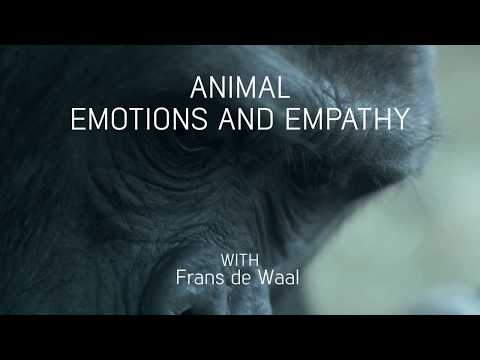 Animal emotions and empathy with Frans de Waal