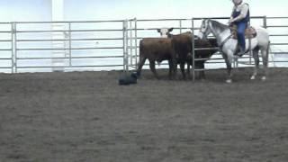 Cow Dog Demo !