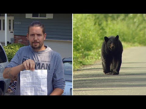 3 Arrests Made As Officers Hunted Bears In Coquitlam, B.C.
