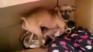 交尾を覗かれた犬がガチギレ!!Twitterで話題のおもしろ動画まとめ thumbnail