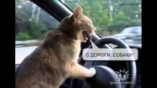 Приколы с кошками Коте зажигают Cat Кошки прикол юмор смех Пушной ржачь Смотри!