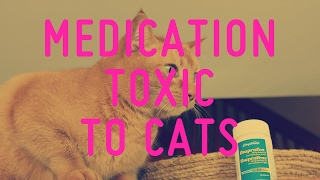Common Medication Toxic To Cats
