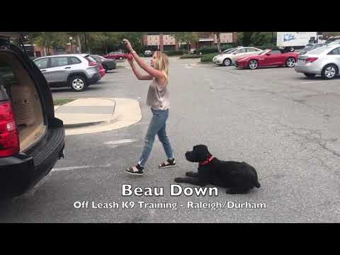 "2.5yo Bouvier ""Beau"" Before and After - Dog Trainer Raleigh Durham"