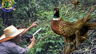 Mountain Pheasant || Cambodia Pheasant || The Beautiful Mountain Pheasant