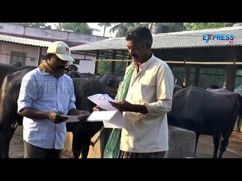 Mixed Farming With Livestock by Krishna District Farmer - Pa