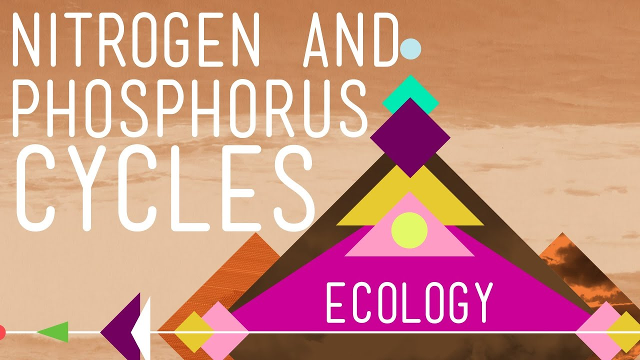 hight resolution of nitrogen phosphorus cycles always recycle part 2 crash course ecology 9 youtube