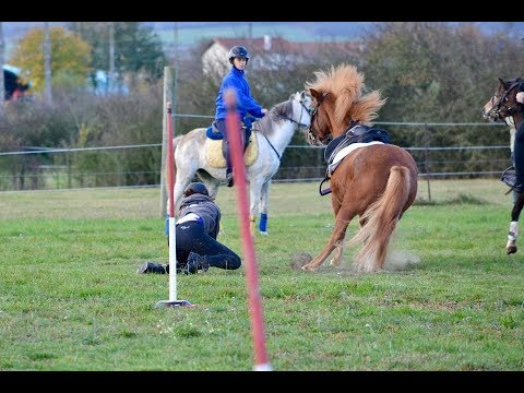 Pony games - Wrr