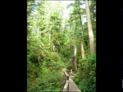Rainforest Trail Regenwald Canada West Neue Musik