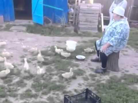 Бабушка из деревни строит гусей!