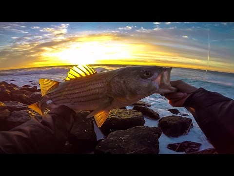 Montauk Surfcasting - The Fall Run 2015 -Epic Striped Bass Blitz