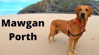 Dog Friendly Campsite Cornwall - MAWGAN PORTH - Sun Haven Valley Campsite
