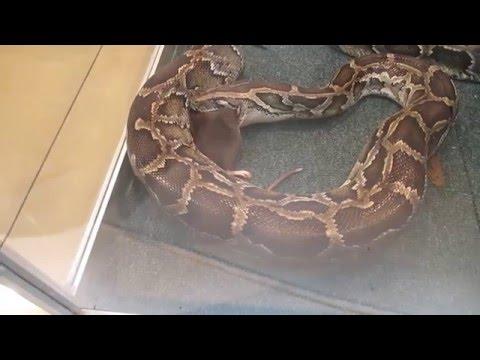 фото змея душит