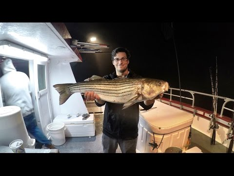 Captree Night Stripers