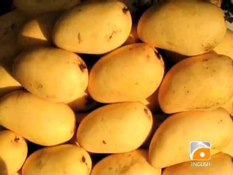 Mango Exports