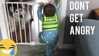 Funny Baby Argues With Dad For The Huskies! [READ DESCRIPTION]