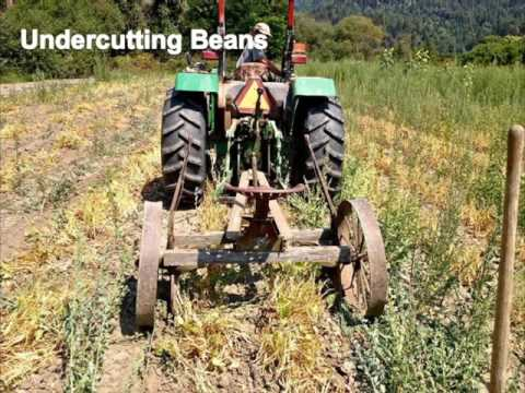 Organic Seed Production Six Webinar Series Part 4: Seed Quality, Harvesting and Equipment