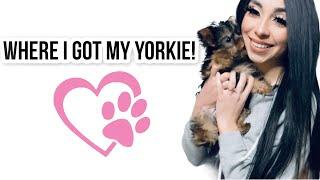 Where I Got My Yorkie! | Finding A Puppy Breeder + Helpful Tips