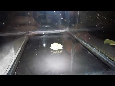 Trinitite in Cloud Chamber Apparatus