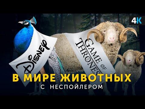 """В Мире Животных с Неспойлером. Зоопарк """"2019""""."""