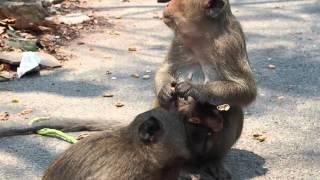 Планета обезьян: