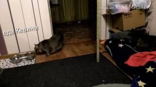Борзая кошка