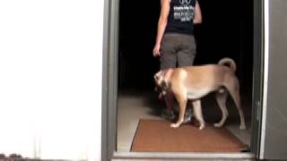 Overcoming Dog To Dog Aggression