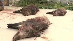 Côte-d'Or : les chasseurs appelés en renfort pour limiter le nombre de sangliers