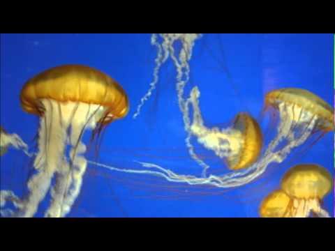 Moodscape Binaural Beatnik - Aqua Deep