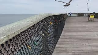 Padlock Tradition on Fishing Pier in Ocean City Maryland