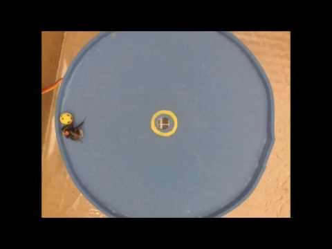 Watch a bee score a goal | Science News