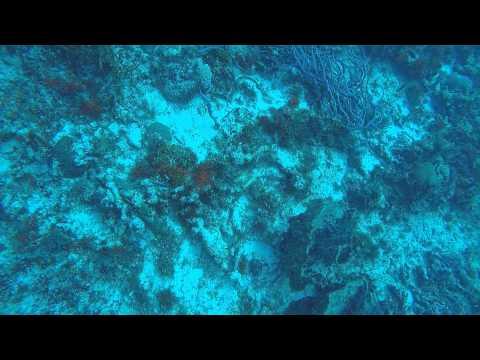 POV Diving - Dalila - Cozumel - México
