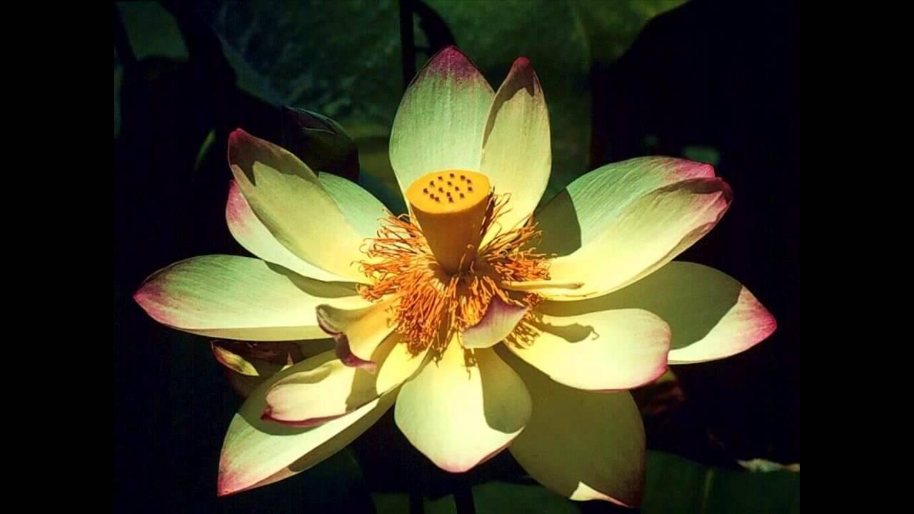 Las Mejores Flores Y Plantas Exoticas Del Mundo Youtube
