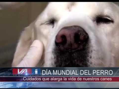 Día Internacional Del Perro Youtube