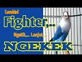 Burung Lovebird Fighter Ngetik Ngekek Panjang Labet Jenis Apa Saja Bisa Terpancing Bunyi  Mp3 - Mp4 Download