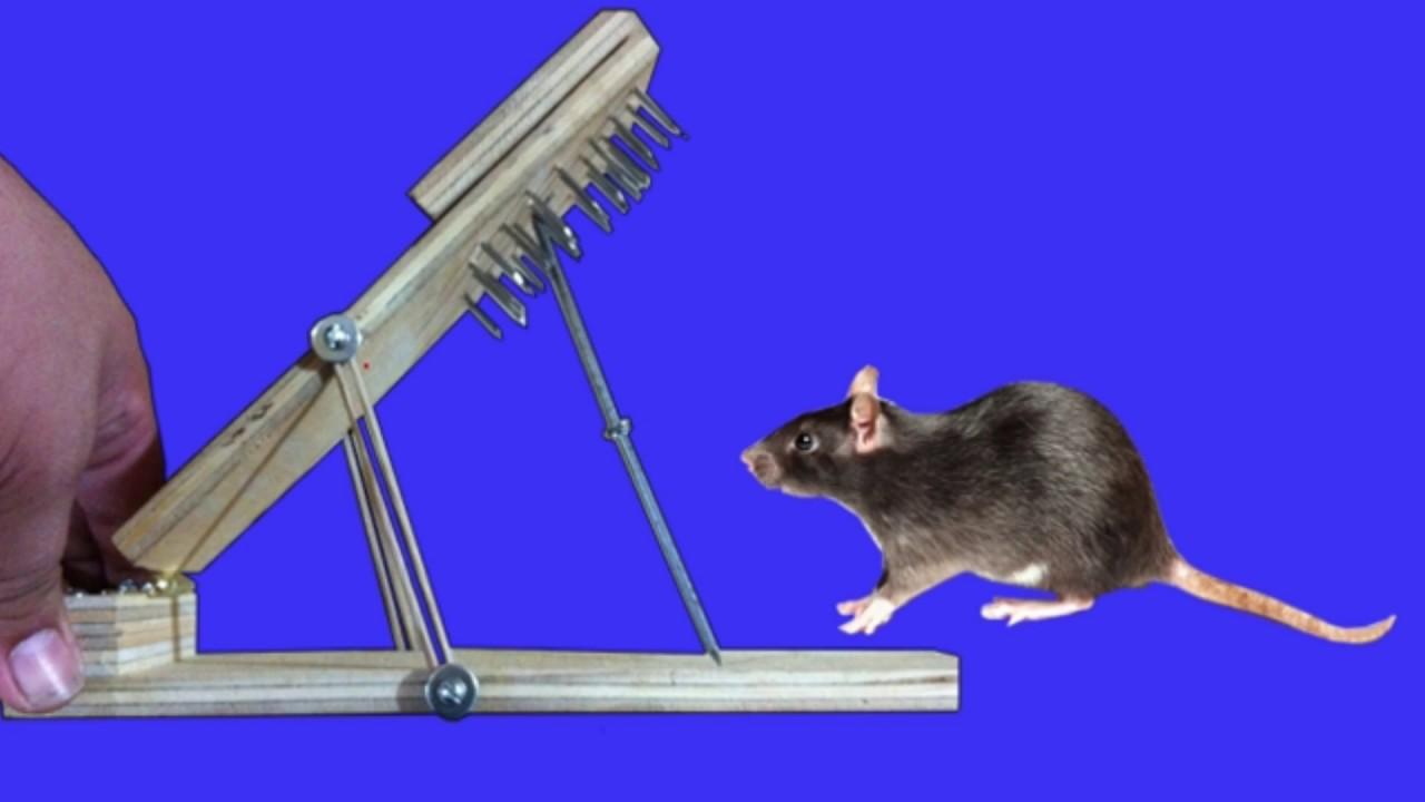 Como hacer una trampa para ratas casera letal youtube - Trampas para cazar ratas ...