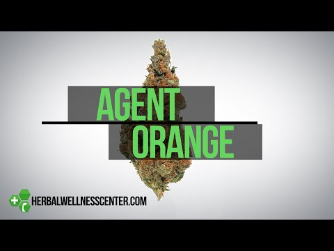Agent Orange strain review