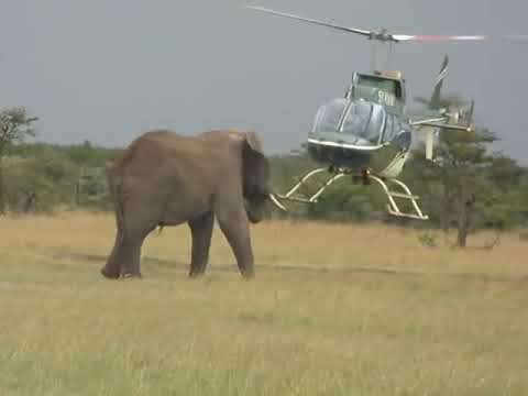 elephants VS the helicopter