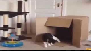 FUNNY VIDEOS Funny Cats Funny Cat Videos Funny Animals