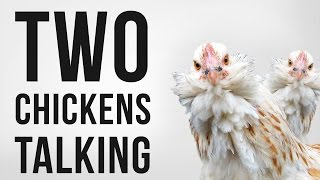 Chickens Clucking (Softly) - Royalty Free SFX