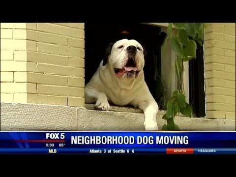 DC's most beloved dog, Romo, moving out of Adams Morgan neighborhood